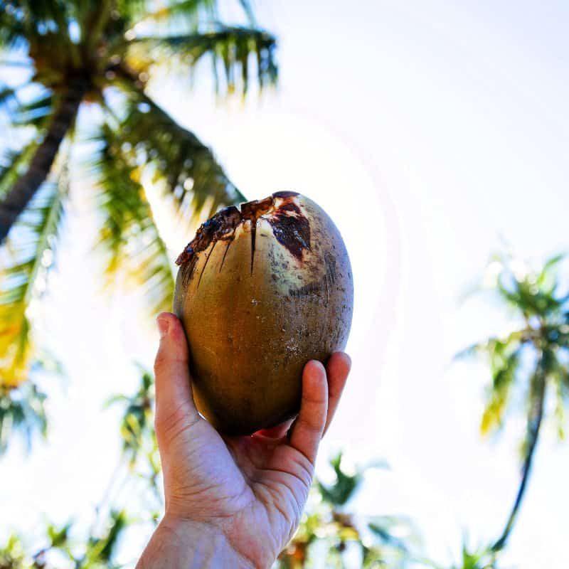Kokosöl ist ein gesundes Fett